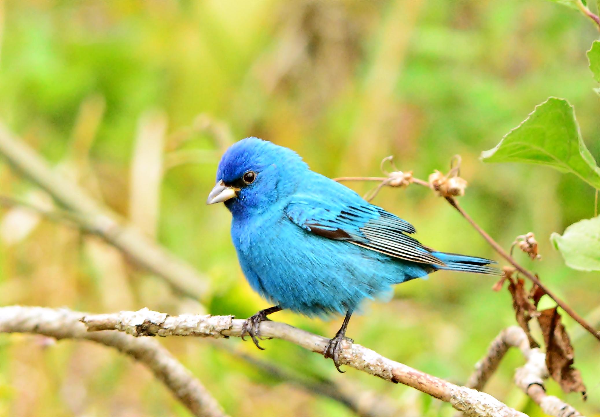 картинка что есть синего цвета данной софийской